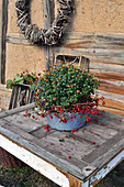 Chrysanthemum Decorated With Rosehips In Old Bowl