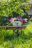 Lilac in ornamental tub on old wooden cart in garden