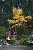 Fire bowl on terrace in mature garden