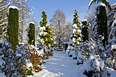 Snowy path leading between clipped yew columns, false cypresses and shrubs
