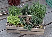 Crate of herbs: rosemary, marjoram, oregano, mint