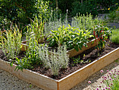 Sage, curry plant, chilli plant and lemongrass in raised bed made from planks