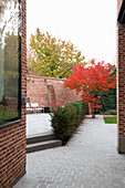 Japanese maple with autumn foliage in paved back courtyard garden with terrace