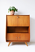 Potted Chinese money plant (Pilea peperomioides) on retro bureau