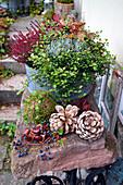 Autumn bowl with wire wine, broom heath, ragwort and purple bells