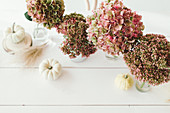 Autumnal arrangement of pumpkins and hydrangeas