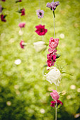 DIY-Windpsiel aus Sommerblüten