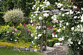 Climbing rose 'Snow White' at the rose arch, harlequin willow in the bed