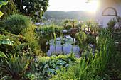 Water lilies in garden pond