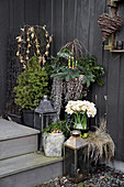 Lanterns, spring bulbs and small conifer on steps