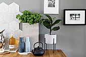 Bottle of oil, salt and pepper shakers, basil in concrete pot, teapot and houseplant against marble tiles and grey wall