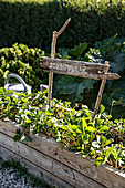 Rustic wooden sign with Swedish text in raised bed of strawberries