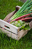 Freshly picked spring onions with salad leaves and rhubarb in a wooden box