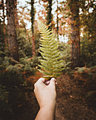 Hand holding fern leaf in autumn woods