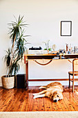 Desk and houseplant in the study, dog lies on the floorboard