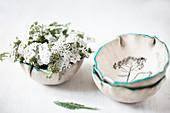 Gemeiner Schafgarbe (Achillea millefolium) in Keramikschale