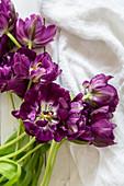 'Purple peony' tulips