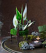 Spathiphyllum Einblatt und Schneebusch