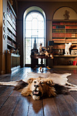 Lion head rug on wooden floor of library with full height, arch-topped window
