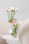 Ranunculus in vases on table