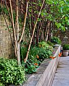 Raised flowerbeds with wooden surround in garden