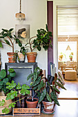 Vintage-style accessories and various houseplants in terracotta pots