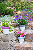 Petunias, balloon flowers and million bells in painted terracotta pots