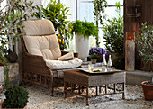 Wicker chair in pleasant seating area amongst lush planting in conservatory