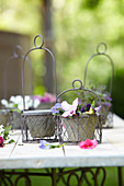 Violas in wire hanging baskets on garden table