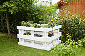Flowering plants in DIY raised bed made from pallets in summery garden