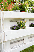 Flowering plants and white pebbles in DIY raised bed made from pallets