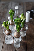 Hyacinths in bulb vases on wooden table