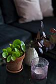 Teelicht, Grünpflanze in Topftopf und Blätterzweig in Vase als Deko auf Couchtisch