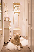 Dog lying on sheepskin rug in front of vintage-style longcase clock in hall