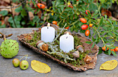 Candles with moss and acorns on tree bark