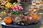 Herbst-Arrangement mit Stiefmütterchen, Kürbissen und Äpfeln