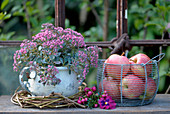 Old pot planted with sedum next to basket of apples
