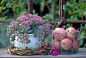 Alter Kübel bepflanzt mit Sedum, daneben ein Korb mit Äpfeln