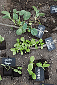 Pflänzchen mit DIY-Pflanzenschilder