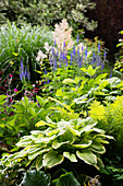 Hostas, veronica and ferns in herbaceous border