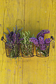 Lavender, rosemary and buddleia against yellow wooden background