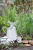 Antique enamel jug in bed of ferns