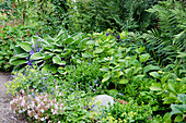 Perennial bed in the shade with funkie, hydrangea, boxwood, cranesbill and fern