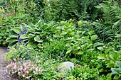 Staudenbeet im Schatten mit Funkie, Hortensie, Buchsbaum, Storchschnabel und Farn