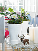 Stag figurine in front of hellebores in white planters on small table