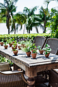 Many different plants in clay pots as decoration on a patio table