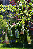 Wiesenblumen in Glasflaschen aufgehängt an blühendem Obstbaum