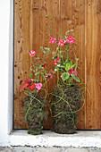 Sommerblumen in dekorativ mit Moos umwickelten Gefäßen