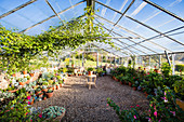 Large greenhouse with gravel bed and ornamental plants in plant pots