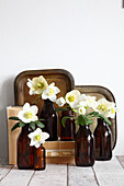 Hellebores in brown bottles